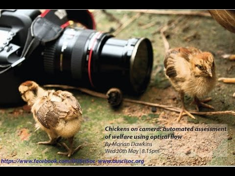 """Chickens on camera: automated assessment of welfare using optical flow"" By Professor Marian Dawkins"