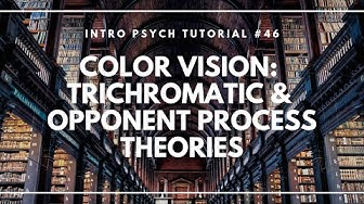 Color Vision: Trichromatic and Opponent Process Theories (Intro Psych Tutorial #46)