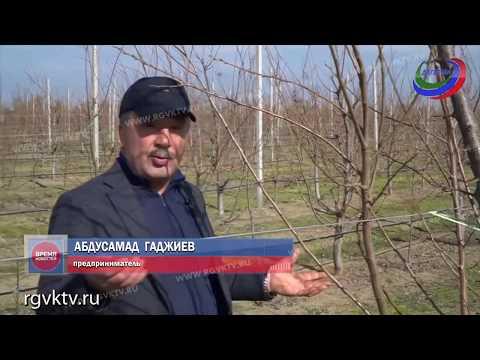 Суперинтенсивный сад. В Дербентском районе реализуется крупный инвестпроект