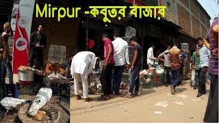 Fancy Pigeon Market in Mirpur Dhaka BD | Pigeon Hut | Kobutor bikroy Bazar