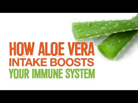 How Aloe Boosts The Immune System And Heals The Gut