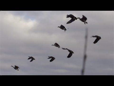 Drake's Migration Nation Season 10 Prince Edward Island Canada 2019