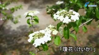 佐賀市久保田町の県立森林公園で、鑑真和上のふるさと中国・揚州市から...