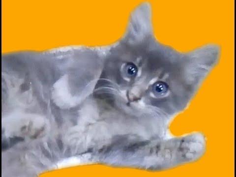 Komik kediler,kedi kavgası, kedi,  funny cats, cats playing, cats fighting