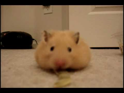how to get a hamster to like you