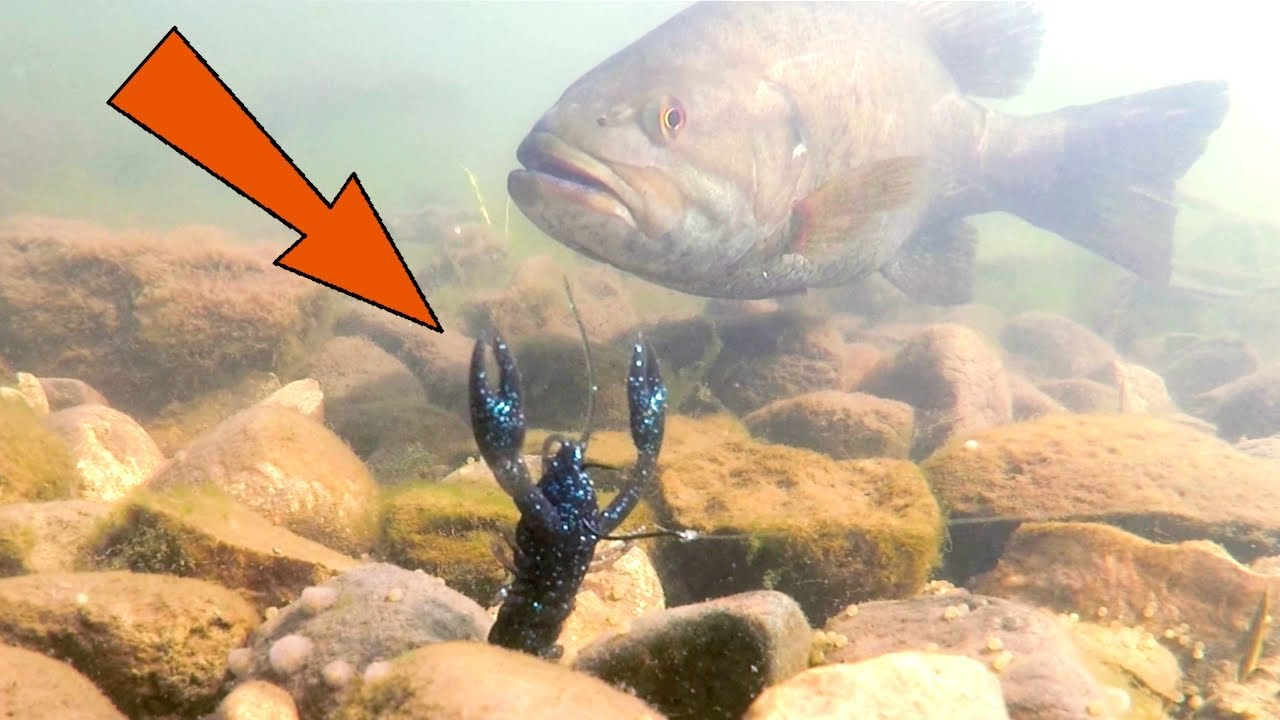 GIANT Smallies DESTROYED This Rig!