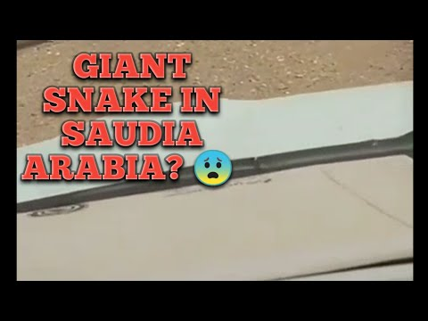 Giant Snake In Saudia Arabia |  Sign of Qayamat??