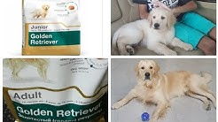Changed Dog Food from Junior to Adult - ROYAL CANIN ADULT & BEAPHAR SALMON OIL