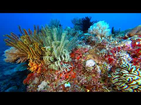 Palawan-Dives-03-SunrizeDives-Coral Gardens-Destacado-Rock-North-Rock-Paul-Ranky-4K
