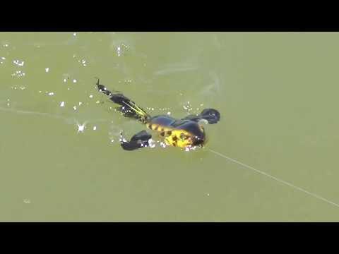 ABTs Baby Buzz Bird ~ Topwater Buzzbait ~ Bass Fishing