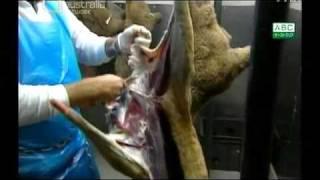 録画をチェックしていたら、オーストラリアが中国へカンガルー肉を輸出...
