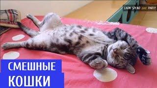 Подборка Смешные кошки 2016 | Funny Cats Compilation 2016