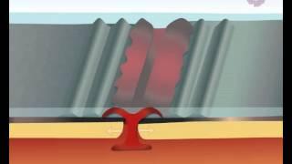 formation d'une dorsale océanique thumbnail
