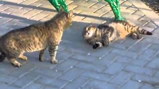 полтава-крым+коты.mp4