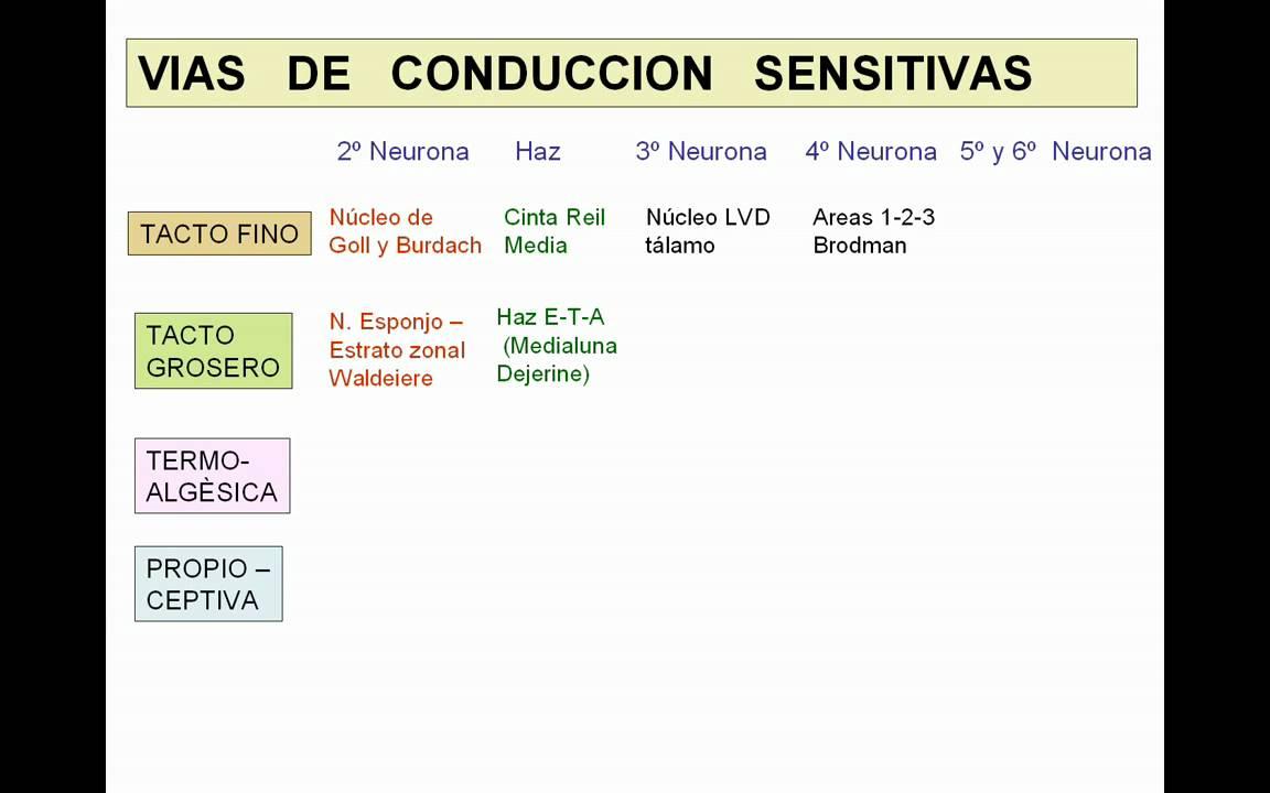 VIAS DE CONDUCCION NERVIOSA GENERALIDADES  YouTube