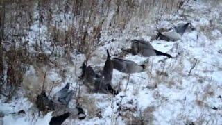 Goose hunting, 6 November 2011, part 3 охота на гуся 6 ноября 2011 года, часть 3