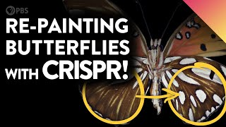 The Art of Gene-Editing Butterflies (Painting with CRISPR!)