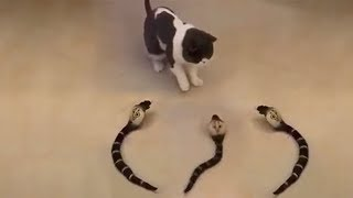 Cute is Not Enough - Funny Cats and Dogs Compilation #183