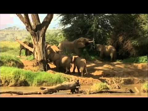 Elephants of Samburu prog2