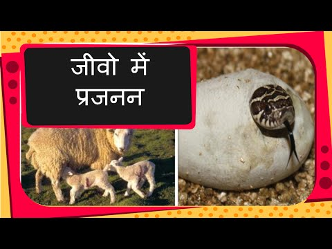 Delhi Safari full movie in hindi from YouTube · Duration:  1 hour 36 minutes 40 seconds