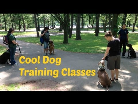 Getting Creative with Dog Training Classes
