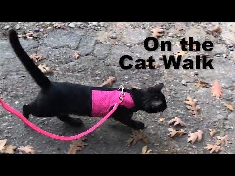 Walking My Cat *NOT CLICKBAIT*