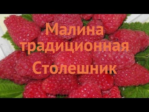 Малина традиционная Столешник (stoleshnik) 🌿 обзор: как сажать, саженцы малины Столешник