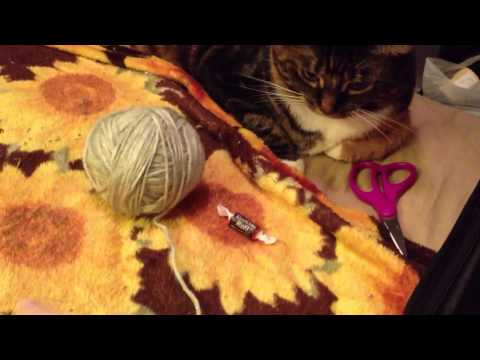 Cat Plays With Yarn Ball