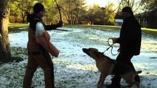Amazing German Shepherd,1 Month Of Guard Training, Look!!
