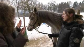 Tierkommunikation mit Tierkommunikatorin Dr. Sabrina Hinneberg - www.rederaum.com
