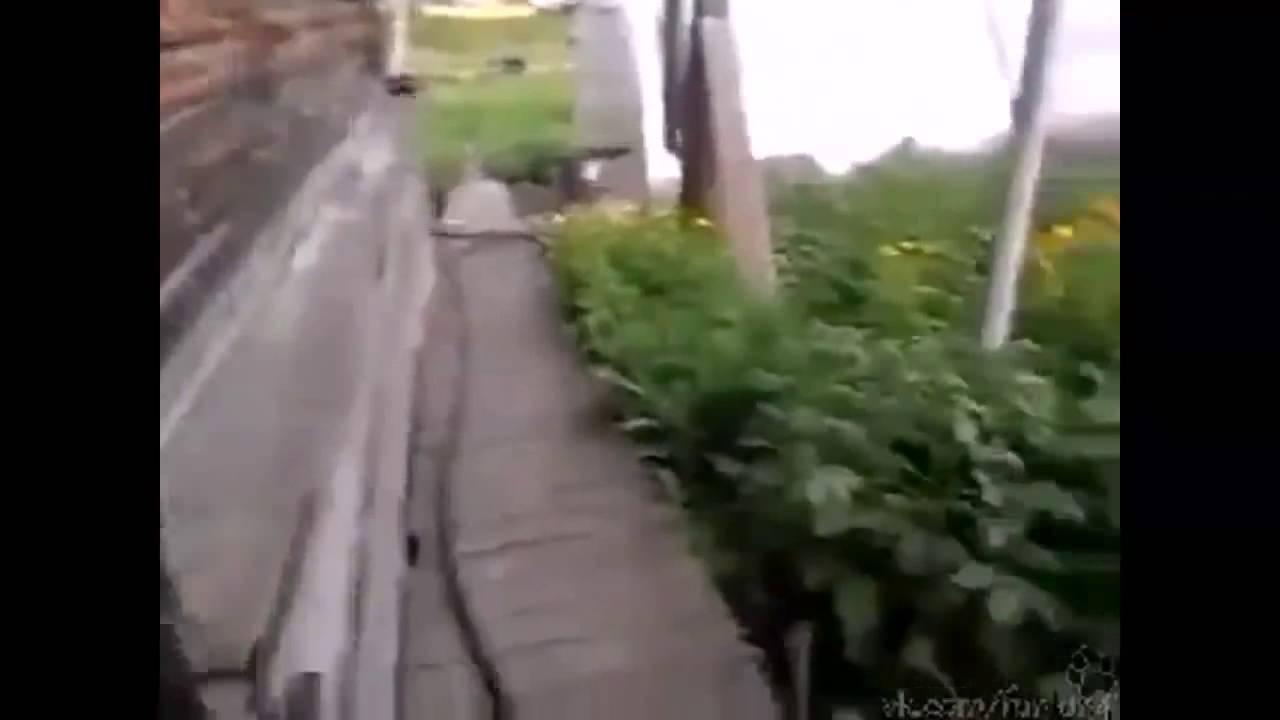 Что несет кота домой