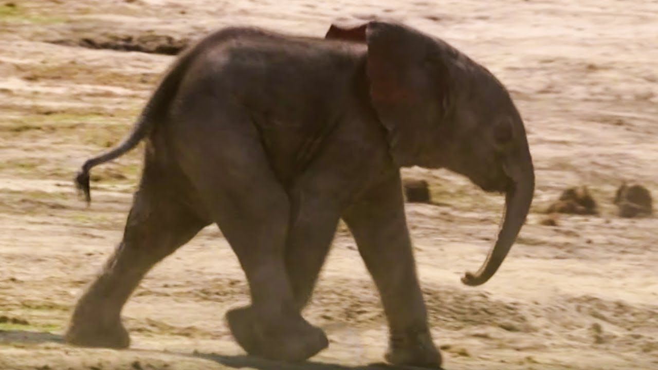 baby elephant s first