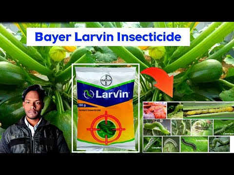 Bayer Larvin Insecticide, Crop | बैंगन में फल छेदक | Thiodicarb 75% WP, Brinjal Fruit Borer Control