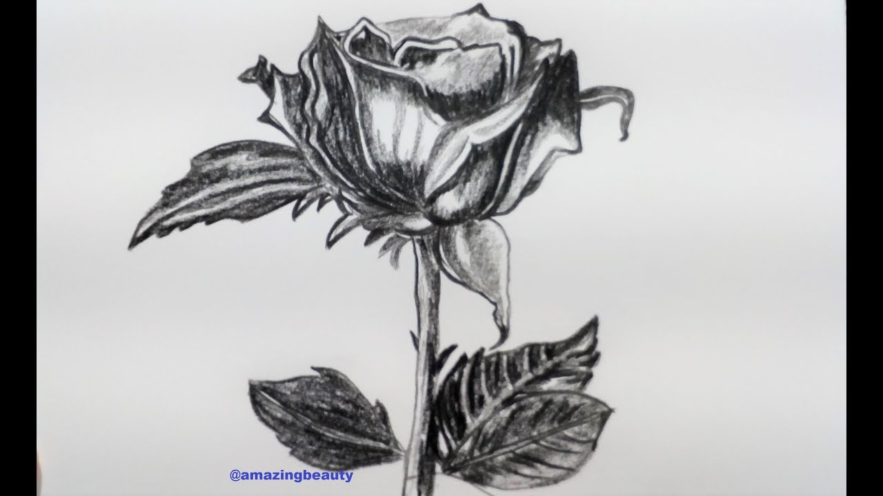 How to draw realistic rose with pencil rose drawing tutorial how to draw realistic rose with pencil rose drawing tutorial step by step ccuart Choice Image