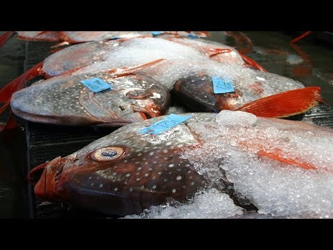 Traces Of Mercury Found In Fish