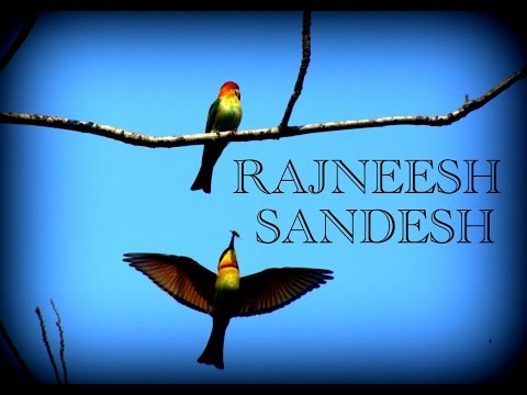Rajneesh Sandesh XXXIV : The birds of paradise