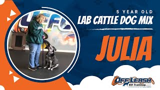 Julia the Lab Cattle Dog Mix | Explores DC | Off Leash Freedom