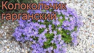 Колокольчик гарганский (campanula garganica) ???? колокольчик обзор: как сажать рассада колокольчика