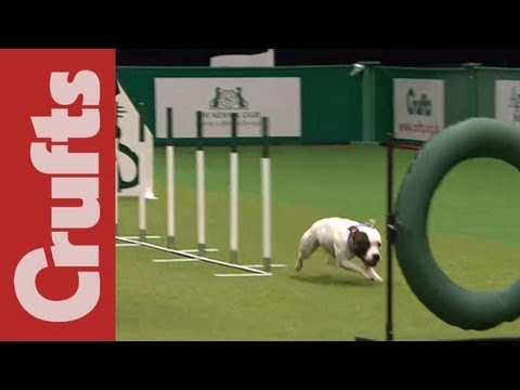 East Anglian Staffordshire Bull Terrier Display Team - Crufts 2012