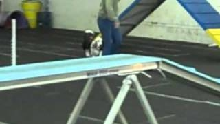 Duke The Deaf Basset Does Agility