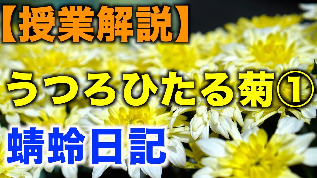 現代語訳 正月 うつろひたる菊 蜻蛉日記 「うつろひたる菊」解説