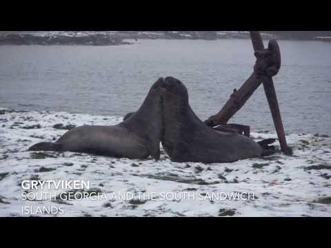 Falkland Islands, South Georgia and the South Sandwich Islands & Antarctica Vlog