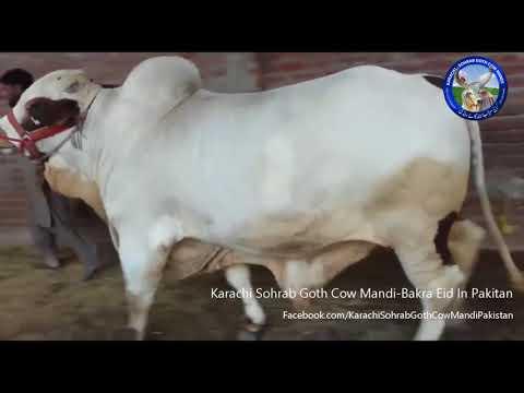 Out Of Class Bachra 2018 | Punjab Cattle | Cow Mandi | Malir Mandi | Multan Mandi | 2018