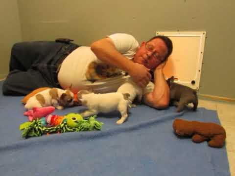 Anastasia Puppies ~ French Bulldog Puppies ~ Oregon French Bulldog Breeders