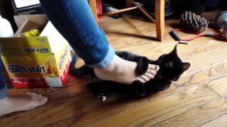 Ollie Suffers Cruel De-feet