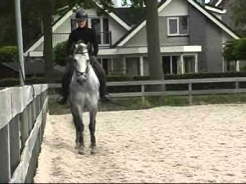 Uitgelezene connemara pony te koop - YouTube QB-41