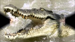 Crocodile Facts - Krindlekrax