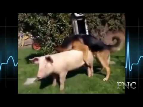 Gay Monkey Blow Job from YouTube · Duration:  16 seconds