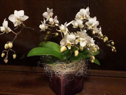 Сказочные мультифлоры и мини орхидеи.