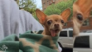 Rescue Dog Lost All Of His Teeth, Then Got The Best Forever Family